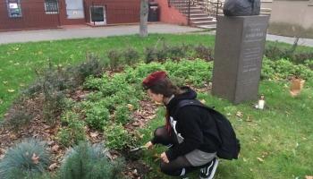 Harcerze posadzili tulipany o nazwie generał Sosabowski