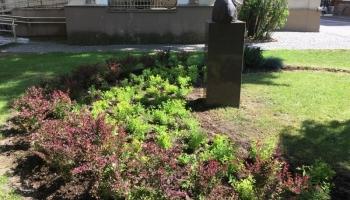 Nowe rośliny przy pomniku generała